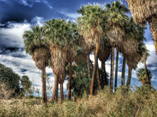 Palmsprings Palm Springs Palm Palmtree Palmtrees Palmtreeporn Palmdesert Palm Desert Coachella Coachella2016 Stagecoach Stagecoach2016 Skyporn Cloudporn