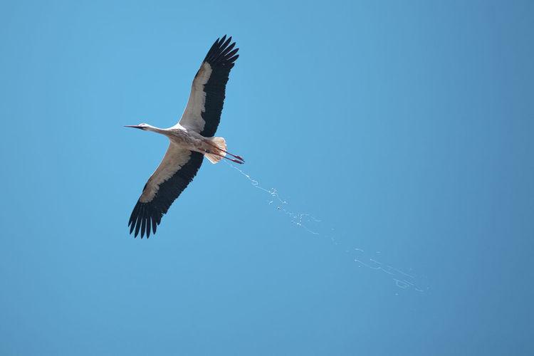 ©️894 stork.