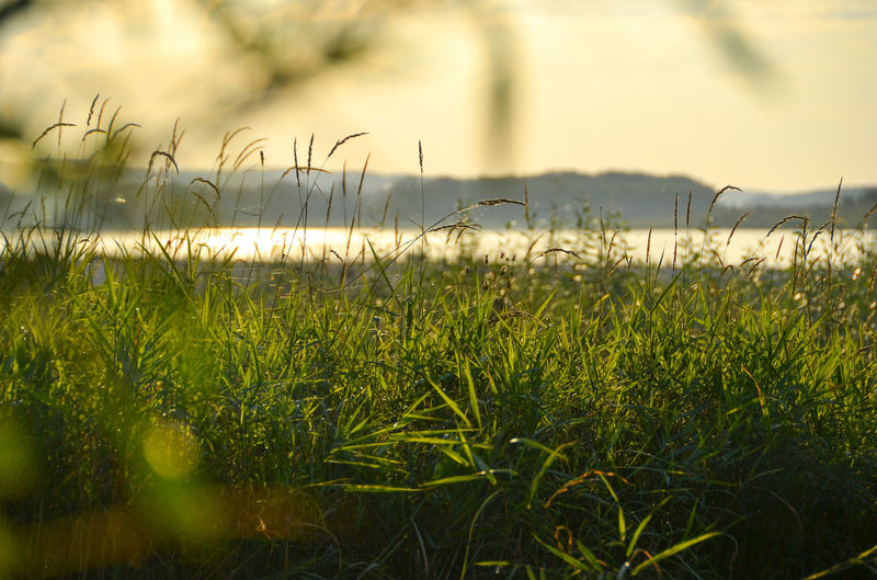 Exit Beauty In Nature Day Grass Green Color Growth Kemerovo Region Nature No People Outdoors Plant River River Tom Russia Siberia Sunset Water EyeEm Selects