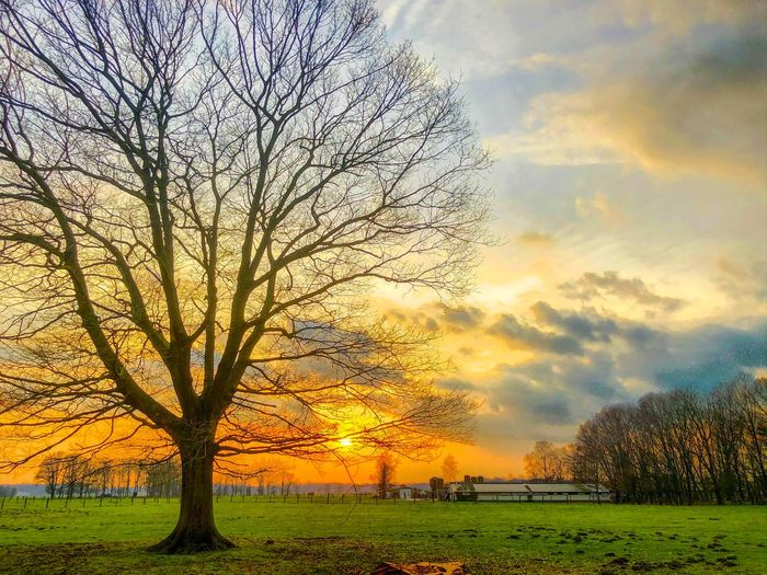 Colorful and dramatic fiery sunset or sunrise sky over a Countryside landscape with a big bare tree on the foreground Sky Sunset Plant Beauty In Nature Tree Cloud - Sky Tranquility Tranquil Scene Growth Orange Color Nature Scenics - Nature Field Landscape Idyllic Land Environment No People Grass Outdoors