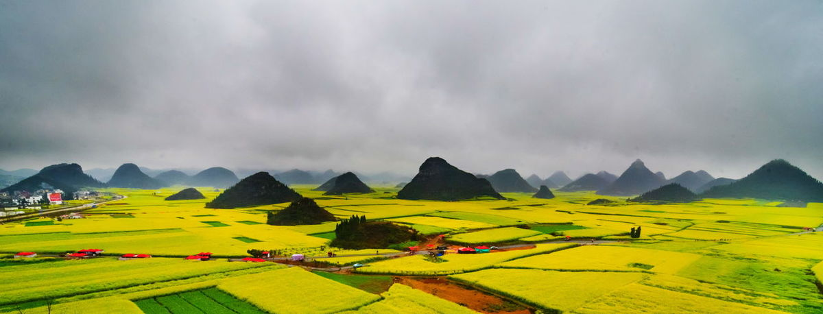 Canola field, rapeseed flower field with the mist in Luoping, China Luoping Rain Rapeseed Field Aerial View Beauty In Nature Canola Canola Field Day Field Fog Grass Hill Landscape Mist Mountain Mountain Range Nature No People Outdoors Rapeseed Oil Rapeseed Yellow Tadaa Scenics Sky Tourism Tranquil Scene Tranquility Village