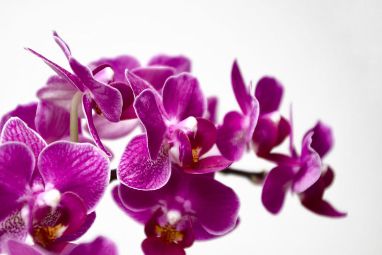orchids with a