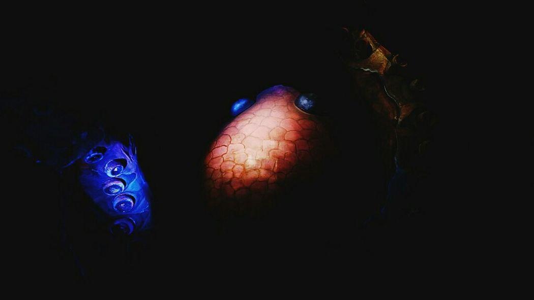 Giant octupus Sea Creature Colors Dark