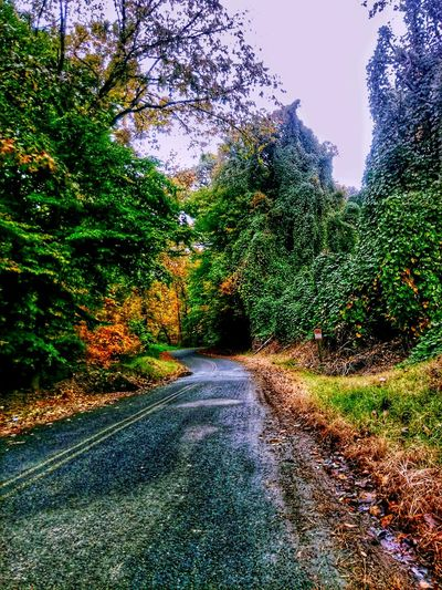 Tree The Way Forward No People Green Color Road Day Outdoors Growth Nature Beauty In Nature Sky