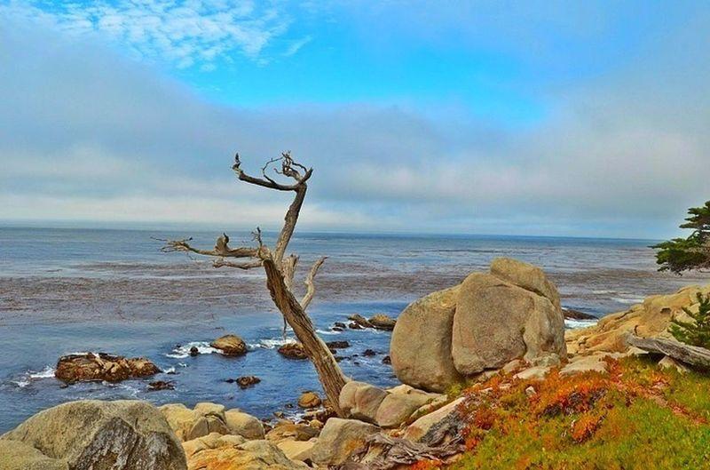 17-Mile Drive Landscape Monterey Sea