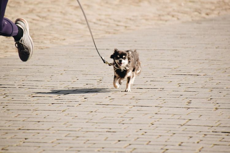 High angle view of dog running on footpath