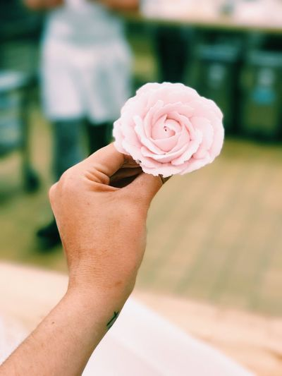 Close-Up Of Hand Holding Pink Rose