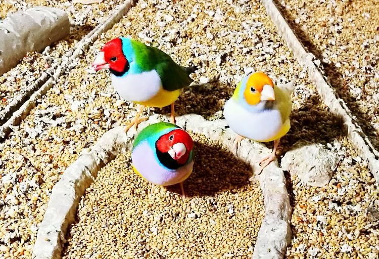 People And Places Bird Multi Colored No People Goranvonkarkin Beautiful Nature Bird Animal Themes Animals In The Wild Wildlife Beak Multi Colored Two Animals Mallard Duck Parrot Full Length Feeding  Perching Field Avian Vibrant Color Zoology Nature Outdoors No People