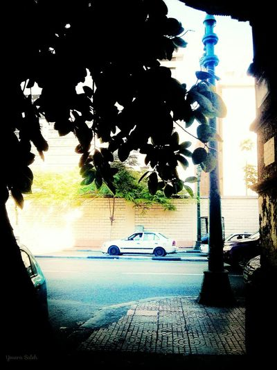Streetphotography Street Photography Street Street Life Street View Traffic View Sidewalk Sidewalk Photograhy Cars Wall Street  Wall - Building Feature Tree Green Tree Tree Leaves Afternoon Afternoon Light Afternoon Sun Afternoon Time Sunny Day Sunnyday Shadows & Lights Cairo Egypt Taking Photos Hello World Love To Take Photos ❤ 18May_2016