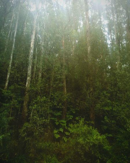 Peaceful and lush Tree Forest Sky Green Color Lush - Description Rainy Season Wet