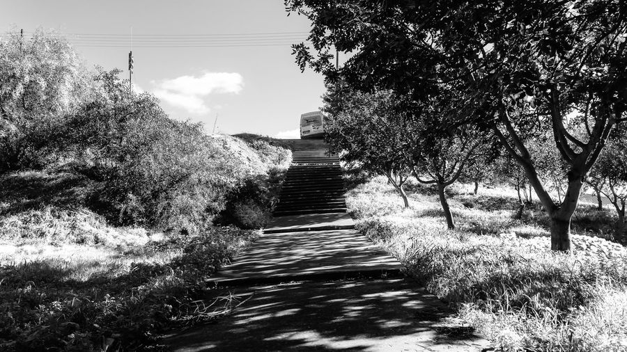 Plant Tree Direction The Way Forward No People Nature Day Growth Sky Footpath Diminishing Perspective Outdoors Sunlight Land Tranquility Tranquil Scene Architecture Environment Landscape Beauty In Nature Trail Long EyeEm EyeEm Best Shots Blackandwhite