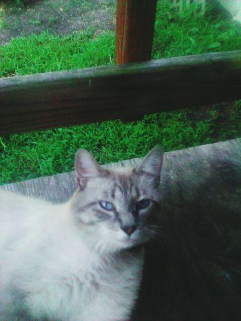 Feline Pets One Animal Cats 🐱 Animal Themes Best Friends Cat♡ EyeEmNewHere EyeEm Selects