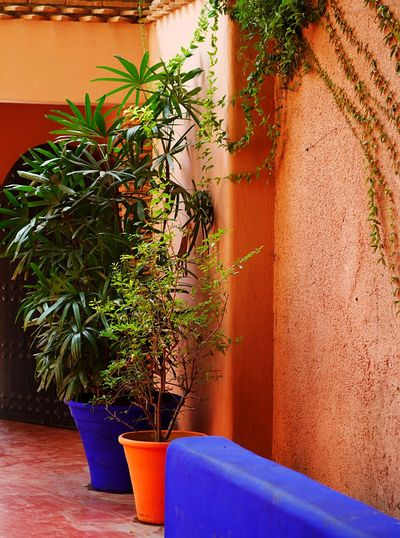 Potted plants against wall and building