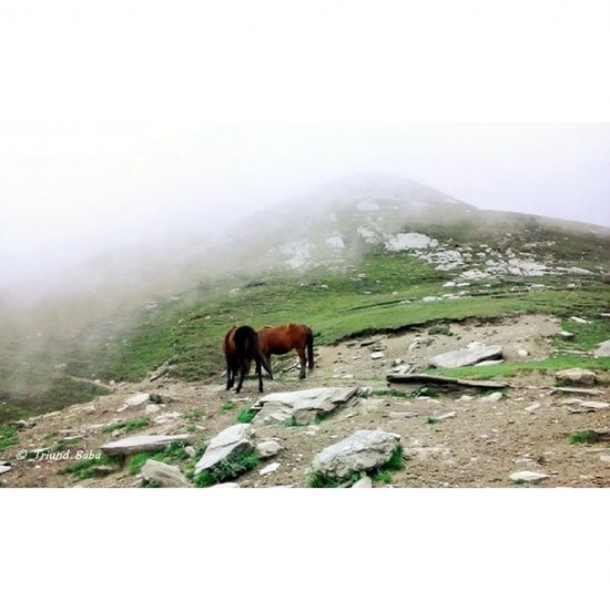 """Me Dhauladhar and selfless """"friends"""" over JalsuPass on my Solo Dharamshala Palampur Paprola Jalsu Chamba Trekking Hiking and Camping . Mountainscape Mountaingram Naturegram Fog Horses Nature"""