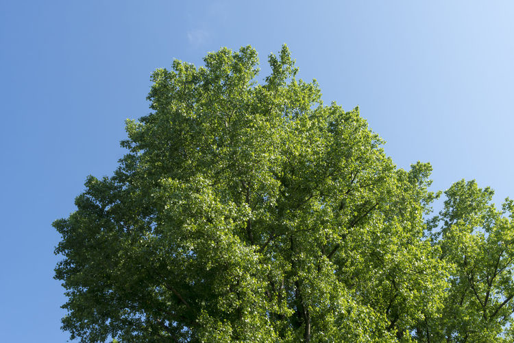 Treetop of a