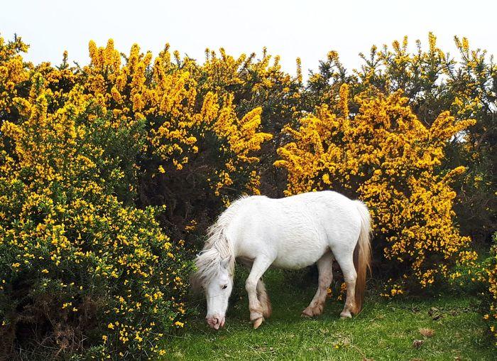 White horse on field against sky
