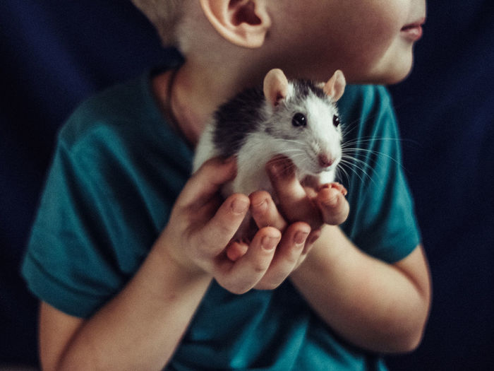 Midsection of child holding a rat at home