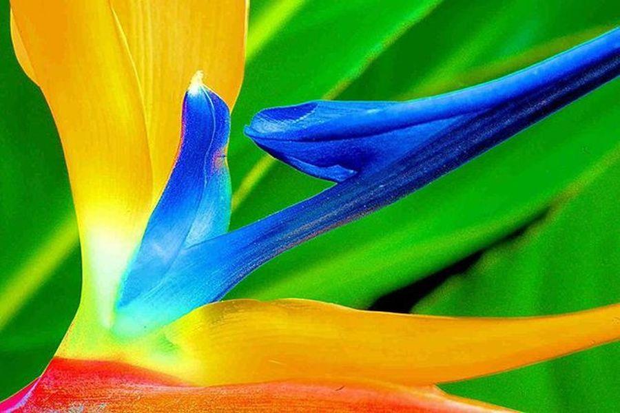 A plant that I like very much Birdofparadise This time, lets do a macro 2) Ig_affair_weekly 3) Ig_closeups 4) Small_world_upclose 5) 5star_images 6) Macro_vision 7) Sn_apr1 8) Mta_macro 9) Pic_groups 0) Macroclique 1) Tgif_nature 2) Pocket_family 3) Igglobalclubmacro 4) Macro_captures 5) Fotofanatics_macro_ 6) Ponyfony_flowers 7) Macroworld_tr 8) 9vaga_macro 9) Flair_macro 0) Quintaflower 1) Ptk_macro 2) Naturehippys 3) Macro_secrets 4) Tv_colors 5) Macro_holic 6) ig_azhubs 7) macro_brilliance 8) eyecatching_pics 9) show_us_macro 0) global_nature_macro