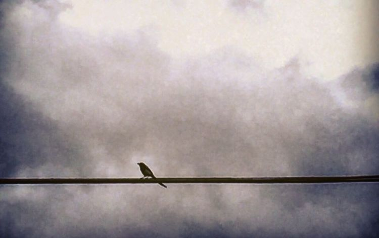 He said wait... She would wait lifetimes... Photography Magpie Don't Ignore Signs Unconditional Love Bird On The Wire EyeEm Gallery Not A Sec Goes By EyeEm Today Yesterday Tomorrow -always Hanging Out Self Control In The Middle Of Nowhere Spring Love And Light 🎈