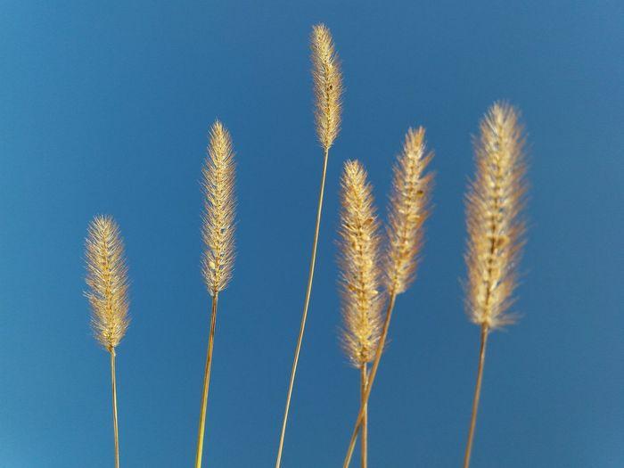 Grass seeds on