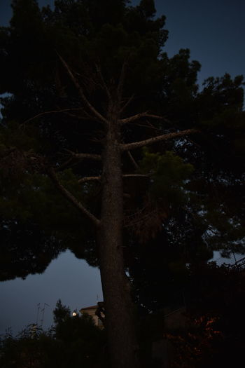 Moon Tree Beauty In Nature Forest Growth Lake Land Moonlight Nature Night No People Non-urban Scene Outdoors Plant Reflection Scenics - Nature Silhouette Sky Tranquil Scene Tranquility Tree Water