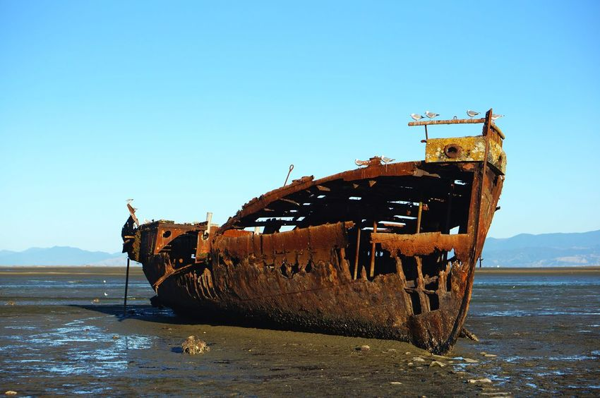 Newzealand Damaged Deterioration Run-down Abandoned Obsolete Rusty Water Nautical Vessel Sea Bad Condition Clear Sky Transportation Weathered Sunken Destruction No People Day Beach Nature Outdoors Motueka Boat