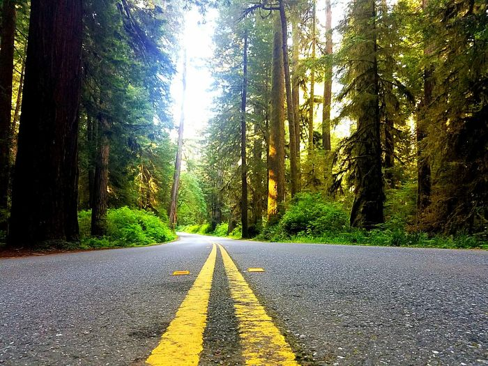 Explore California Glorious NorCal Redwood Highway Vacation State Of Mind Do You Travel Travel Destinations Discovery Go Places Perspectives On Nature The Traveler - 2018 EyeEm Awards The Great Outdoors - 2018 EyeEm Awards