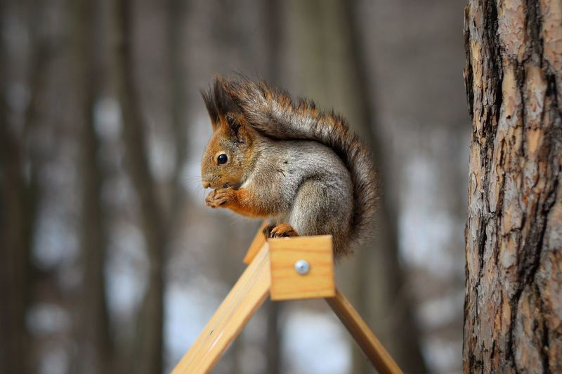 https://www.instagram.com/alyabev_ru/ Animal Themes Animal Animal Wildlife One Animal Focus On Foreground Animals In The Wild Squirrel Wood - Material Day Bird Close-up Mammal Tree Vertebrate Branch Nature Rodent No People Animal Head  Tree Trunk