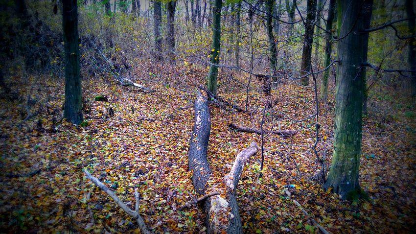 Made by Sony Xperia M4 Aqua Autumn Autumn Colors Dog Joy Montain Bike Track Road Sé, Trees Vas County Vas Megye Village Woods