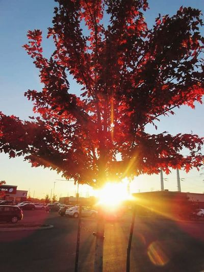Tree Sunset Sunshine Rays