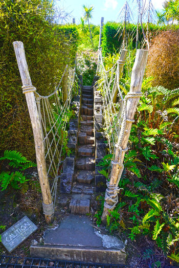 Plants leading to staircase