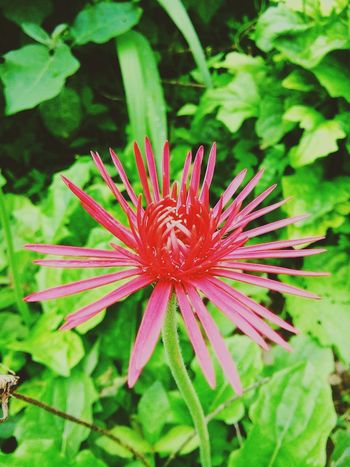 Flower 🌸 Beauty In Nature First Eyeem Photo
