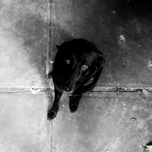 Dogs EyeEm Best Shots Storytelling Mobilephotography