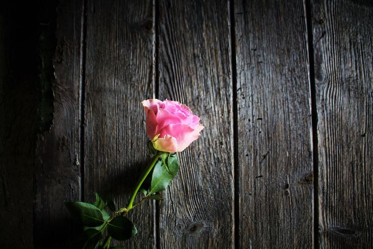 Close-up of pink rose on wood