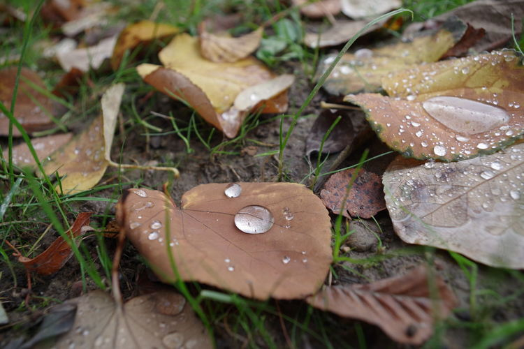 High angle view of raindrops on dry leaves