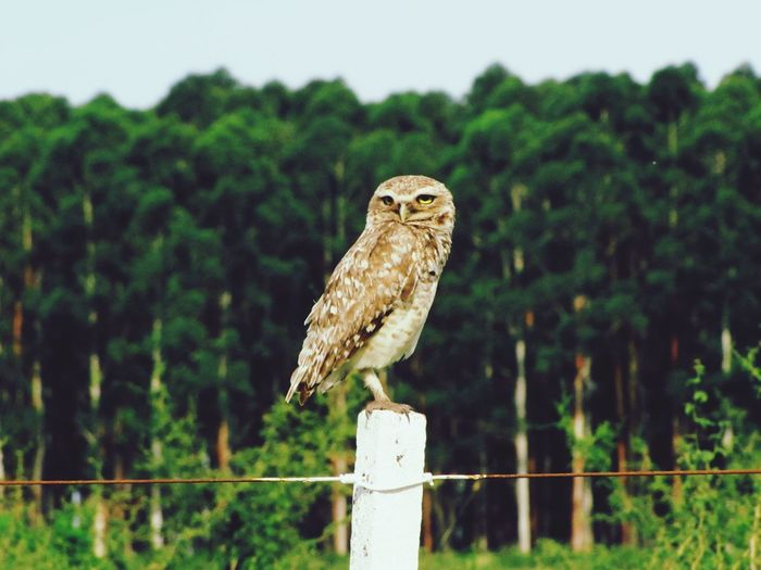 The Great Outdoors - 2017 EyeEm Awards Bird Animal Themes One Animal Animals In The Wild Perching Animal Wildlife Bird Of Prey Nature Focus On Foreground Day No People Outdoors Tree Beauty In Nature Close-up Owl Sky Pet Portraits