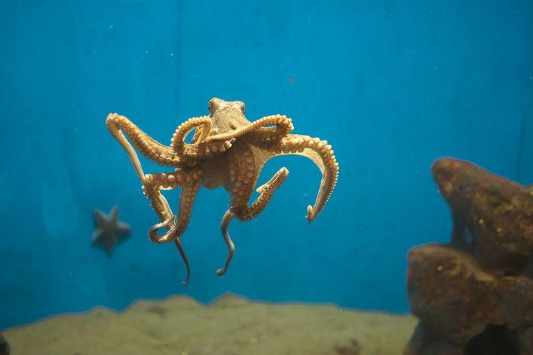 Octopus Swimming In Sea