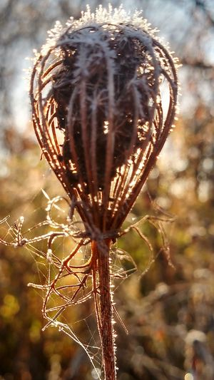 Nature Beauty In Nature Sunlight Tree Grass Outdoors Close-up No People Sky Branch Day Frost Frosty Mornings
