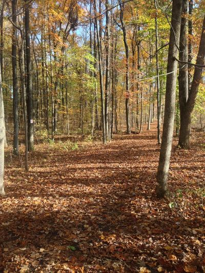 Autumn Autumn Colors Fall Beauty Falling Leaves Pathways Treescape Walking Path Wooded Path