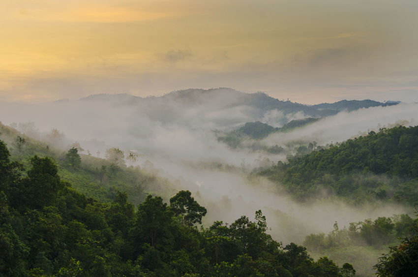 The Foggy forest in the morning at Bukit Barisan Mountains Sumatra Tree Mountain Fog Dawn Forest Beauty Agriculture Morning Sky Landscape Panoramic Foggy Atmospheric Mood Sunrise - Dawn