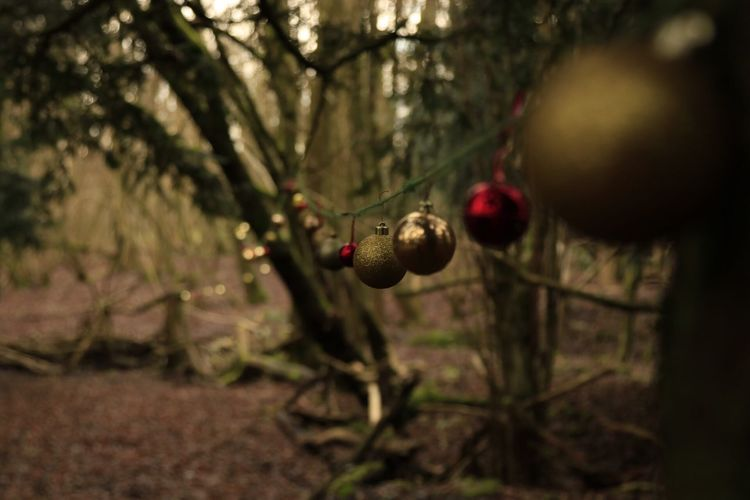 Traveling Home For The Holidays Close-up Tree Branch Fruit Growth Nature Food No People Outdoors Rose Hip Day Freshness Christmas Bauble Tranquility EyeEmNewHere