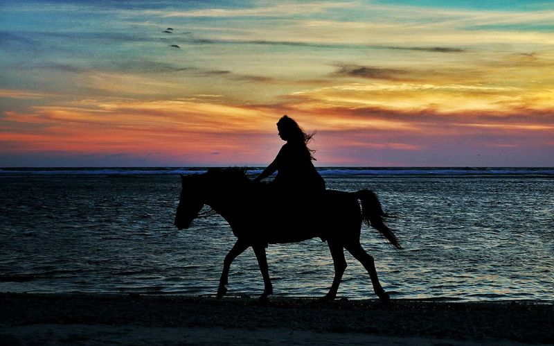 Sunset Horse Silhouette Sky Dramatic Sky Riding Beauty In Nature Outdoors Indonesia_photography First Eyeem Photo EyeEm Best Shots EyeEm Gallery The Week On EyeEm Landscape_photography EyeEm Selects Lombok Island Be. Ready. EyeEmNewHere