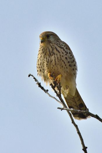 Birdwatching Birds Wildlife Nikon Eye4photography