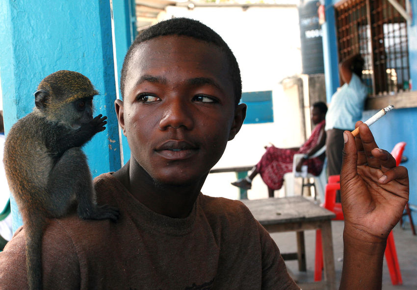 Zanzibar, Tanzania - February 16, 2008: Young African man 25 years old, smoking at an outdoor cafe, holding a cigarette, tame baby green monkey sitting on his shoulder, February 16, 2008. A black man with a trained monkey on his shoulder. Africa Zanzibar Tanzania Stone Town Zanzibar Stone Town Portrait One Person Men Young Adult Close-up Young Men Holding Green Monkey Chlorocebus Sabaeus Sabaeus Monkey Callithrix Monkey; Monkey Ape; Hand-reared Monkey Cigarette In Hand Twenty-five Years Tame Monkey Pet Ape Young Man Trained Monkey