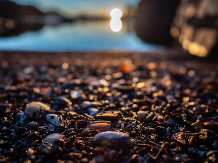 Beach off Hordnes Water Land Selective Focus Beach Sea Nature Pebble Rock No People Solid Close-up Tranquility Stone - Object Sky Scenics - Nature Surface Level Beauty In Nature Stone Tranquil Scene Outdoors Sunset Sun Down Shells Nature