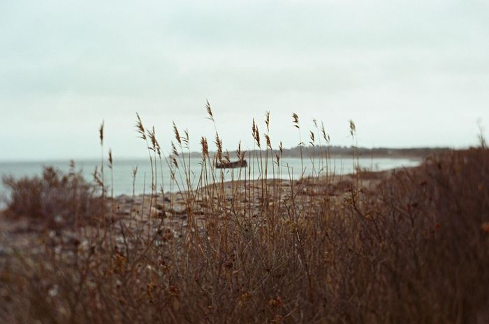 Canon Eos 3 Fujicolor Pro 400H Beauty In Nature Close-up Day Film Photography Grass Growth Horizon Over Water Nature No People Outdoors Plant Scenics Sea Sky Tranquil Scene Tranquility Water