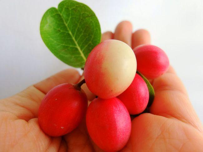 Healthy Eating Fruit Nature Red Bengal Currant Fruits Indoors  Karoda Fruit Food Indoors  Food And Drink Karonda Fruit Indoors