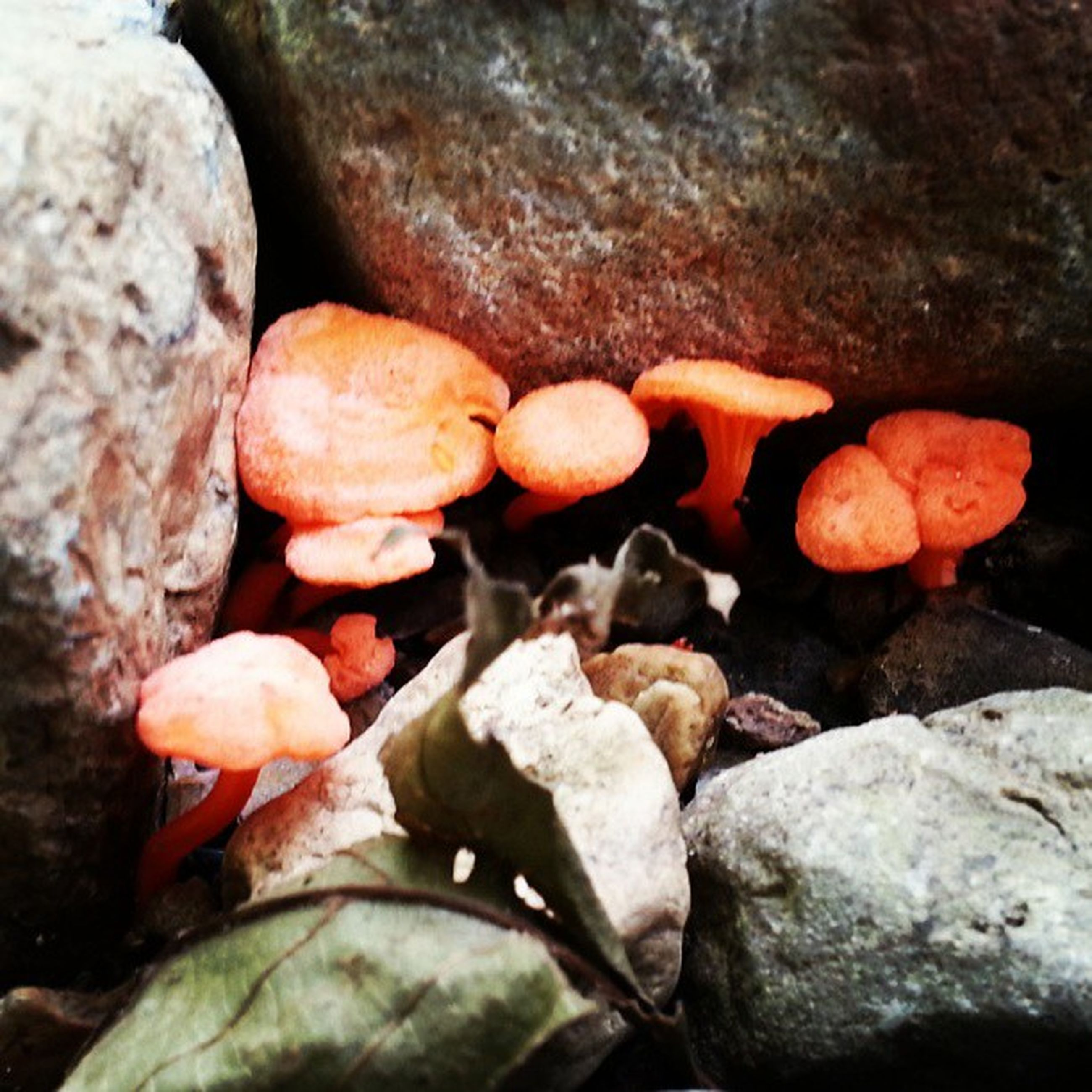 rock - object, nature, stone - object, close-up, rock, stone, outdoors, pebble, beauty in nature, no people, day, textured, tranquility, high angle view, mushroom, red, selective focus, field, fungus, freshness