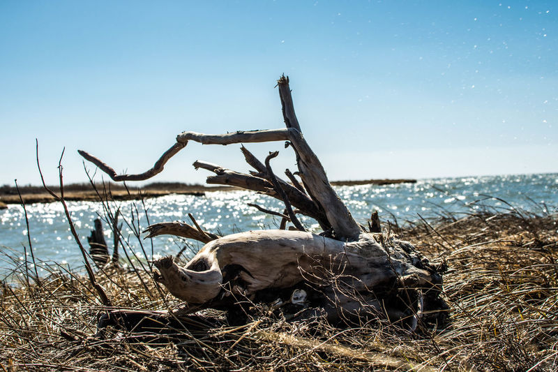 Baltimore Beach Beauty In Nature Chesapeake Bay Clear Sky Cufotos Day Domestic Animals Grass Horizon Over Water Mary Nature Nikon Nikonphotography No People Outdoors Scenics Sea Sky Tranquil Scene Tranquility Water