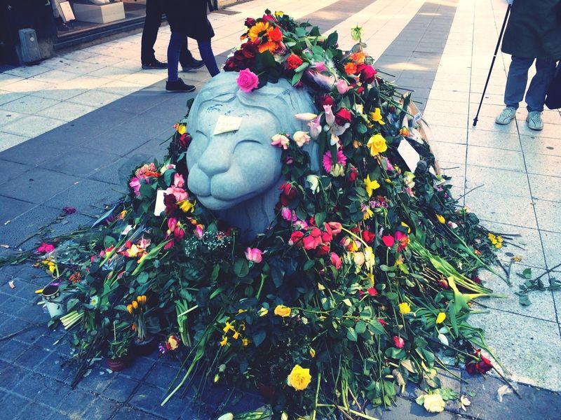 Flower Outdoors Day Statue Low Section April Showcase Sadness Manyflowers Drottninggatan Stockholm Street Photo Prayforstockholm Terror Attack Deaths Grief Streetphotography Love Stockholm The Street Photografher